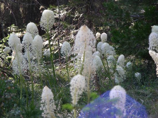 Wolf Creek Inn: Bear Grass