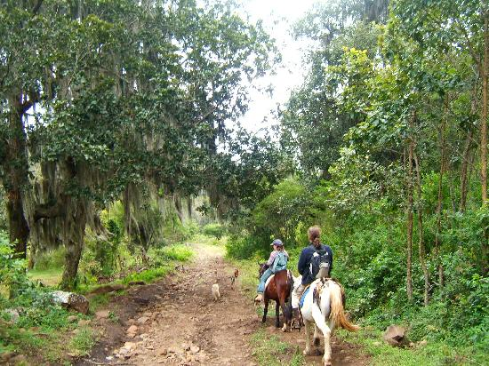 Finca Lindos Ojos: horse back riding (2)