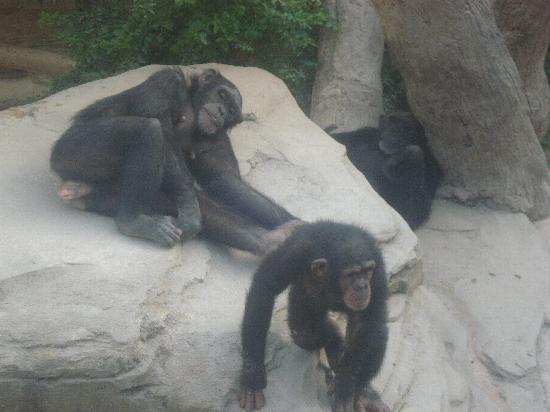 Bioparc Fuengirola: Animales