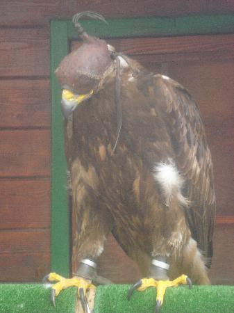 Teleférico Benalmadena: Aves en cautividad
