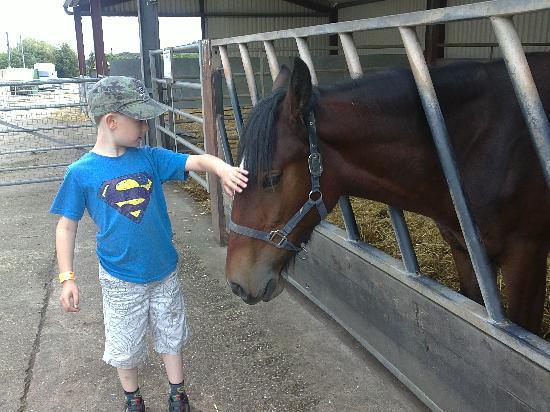 Rand Farm Park: very cute, friendly animals!