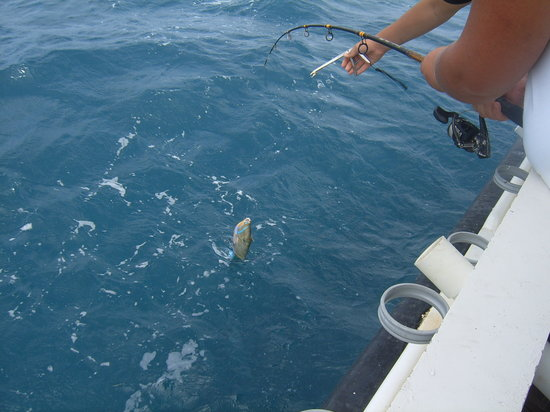 Bottom Fishing Aruba