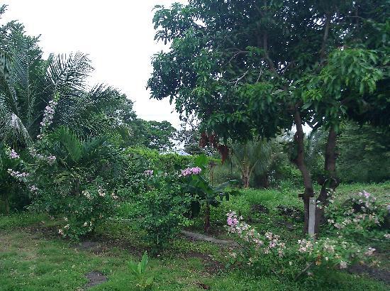 Hotel Monkey's Island Ometepe: Garden