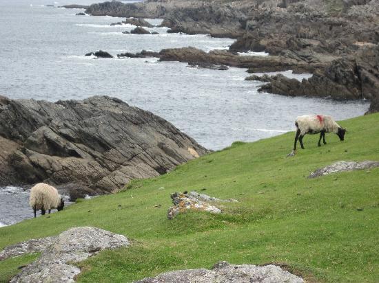 Achill Sound Hotel (Ostan Gob a'Choire) : The Achill Coast Road- Atlantic Ocean side