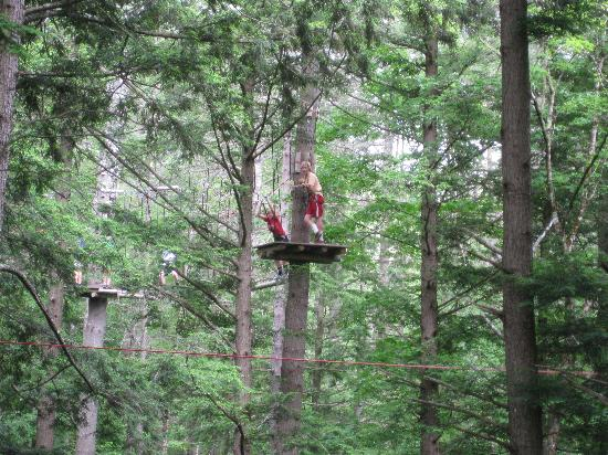 Adirondack Extreme Adventure Course: beautiful trees