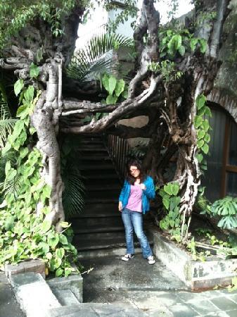 Hotel Hacienda Cocoyoc: lindos escenarios para las fotos