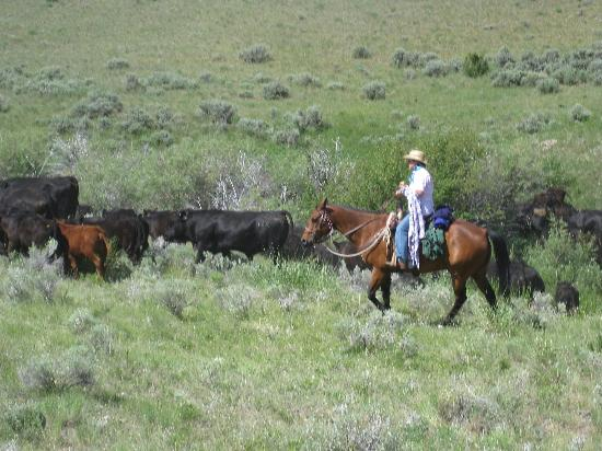 Upper Canyon Outfitters & Guest Ranch: Working those cows