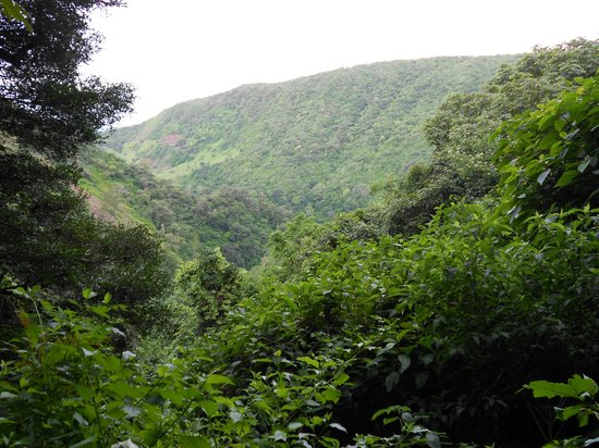 Children's Eternal Rain Forest : Overlook
