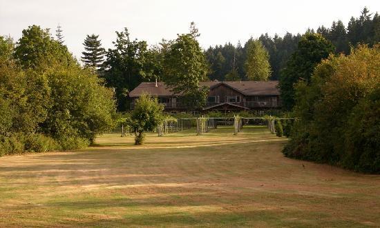 Kiwi Cove Lodge: The kiwi orchard