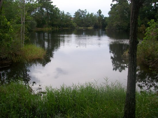 Wekiwa Springs State Park: Look an Alligator-Sand Lake