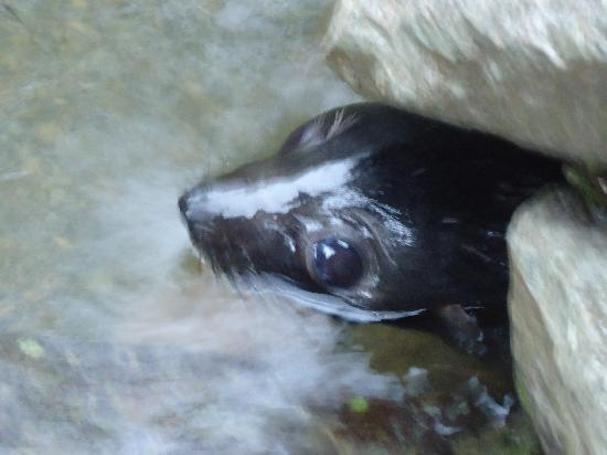 Ohau Stream Walk: Seal right at start of track under railway line