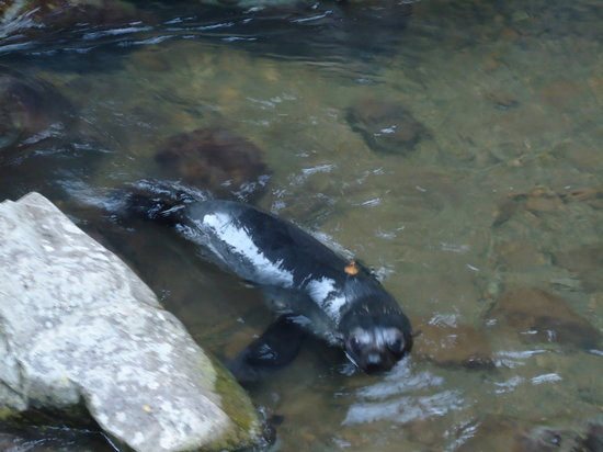 Kaikoura, New Zealand: Seal right at start of track under railway line