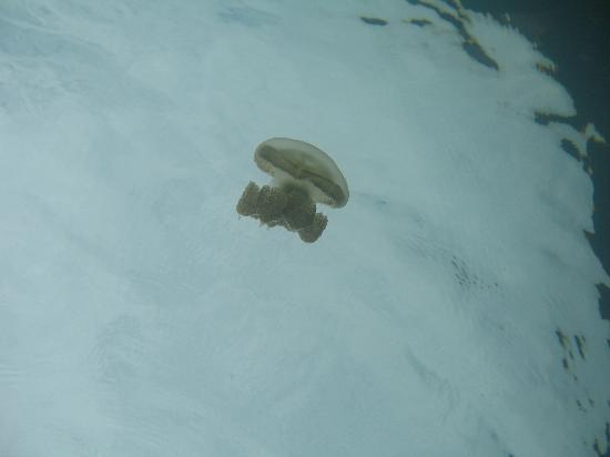 Jellyfish Lake: かわいい