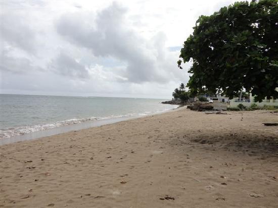 Aquatika Beach Resort : Beach View