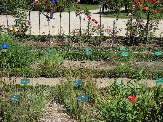 Parc du Thabor : Botanic Garden