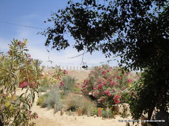 Dar Souleiman : les  fleurs
