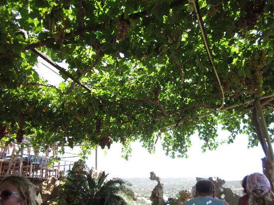 Peyia, Kypros: Grapes hang above the tables