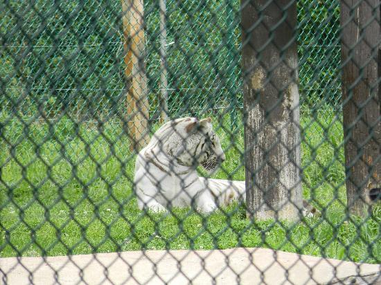York's Wild Kingdom Zoo and Fun Park : Too hot for tigers to play