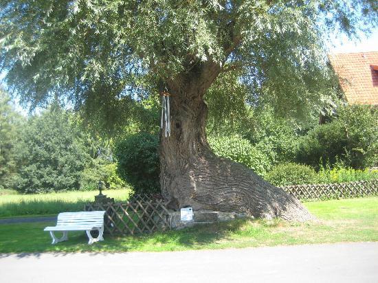 Haus Holtdirk: der schiefe Baum im Gehöft