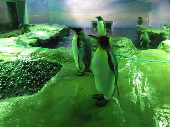 Aquas: ペンギン