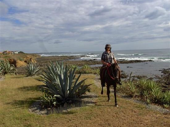 Paradise Riding - Horseback Tours