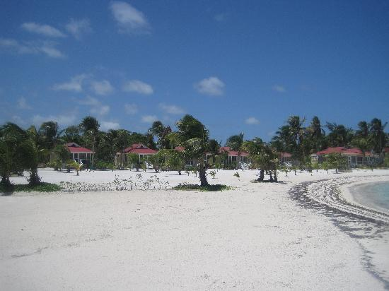 Turneffe Island Resort: The beautiful beach