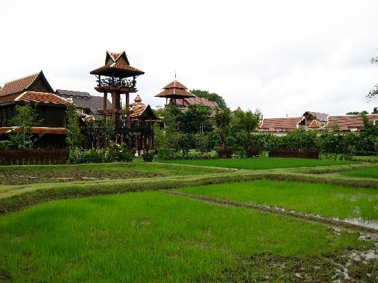 Siripanna Villa Resort & Spa: View from the 'Panna' field back toward the resort
