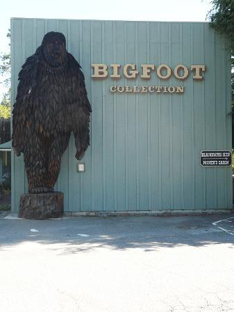 Bigfoot Motel : The Big foot Museum...only a block away