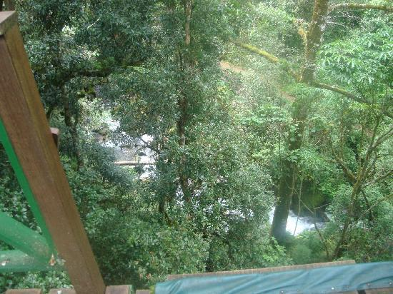 Canopy Tour at Hotel Trogon Lodge : The view from the canopy Wonderful!