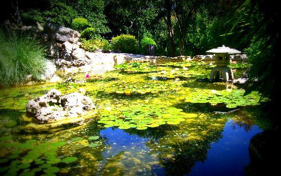 Zilker Botanical Garden: Isamu Taniguchi Japanese Garden