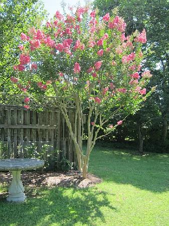 One of the Trees in the lovely garden - Picture of Back Creek Inn ...