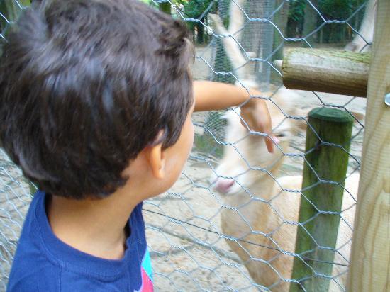 Lignano Sabbiadoro, Italien: i bambini possono accarezzare