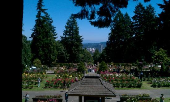 International Rose Test Garden: Rose garden