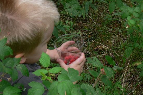Valle Escondido, Nuevo Mexico: picking wild raspberries