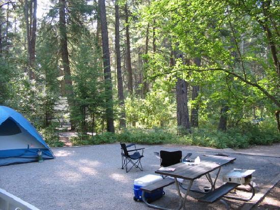 Farragut State Park : Site Shot toward road