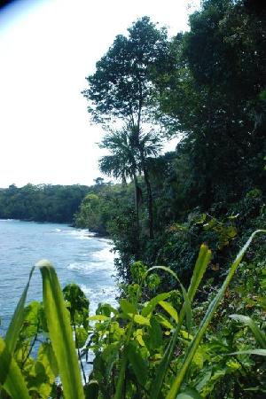 Bucus Tours : Forest Meets Caribe'