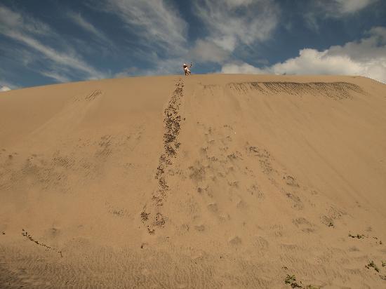 Sigatoka Sand Dunes National Park: tracks on the dune, after going up