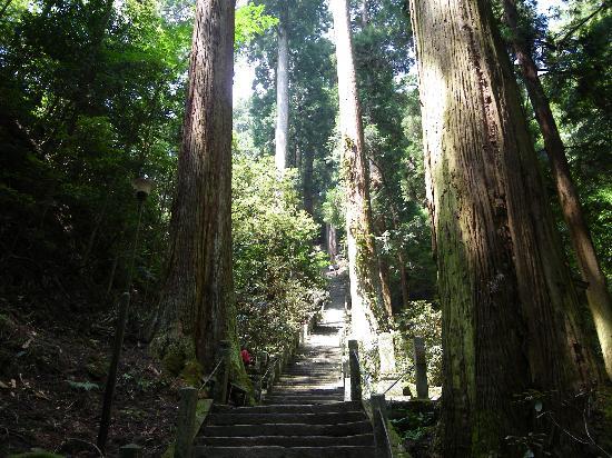 Muroji Temple: 奥ノ院までは木々に囲まれた石段