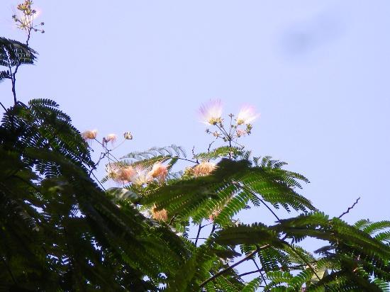 Muroji Temple: この夏赤門脇に咲いた花