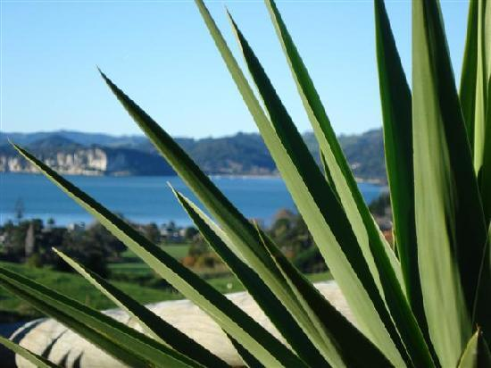Ohuka Place Homestay: Mercury bay views from the bedrooms.