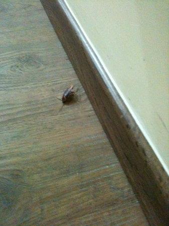 Hayarkon 48 Hostel: cockroach #1