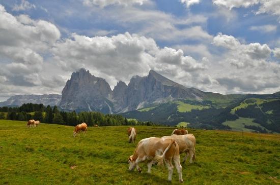 Hotel Arnaria: All'Alpe di Siusi, da Ortisei. Luglio 2011
