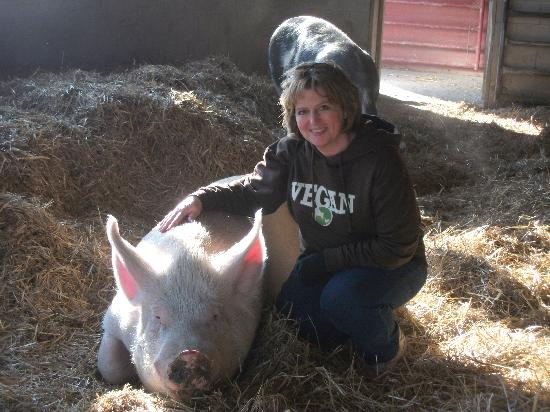 Farm Sanctuary : One of the Wonderful Pigs