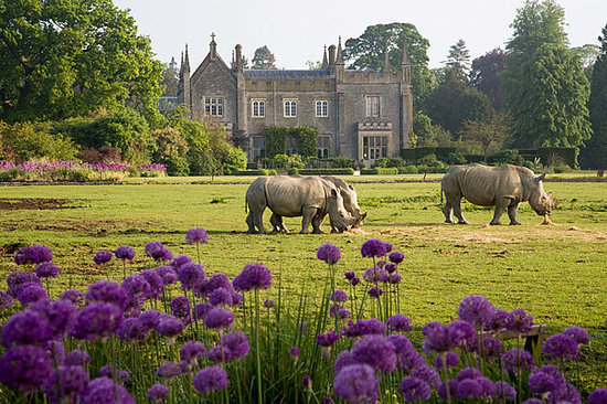 Cotswold Wildlife Park and Gardens : Rhinos in front of the Manor House