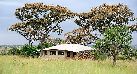 Serengeti Bushtops Camp: Zelt