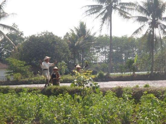 Villa Sumbing Indah: balade ds les rizieres