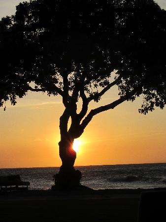 Four Seasons Resort Hualalai: Sunset at Beach Tree