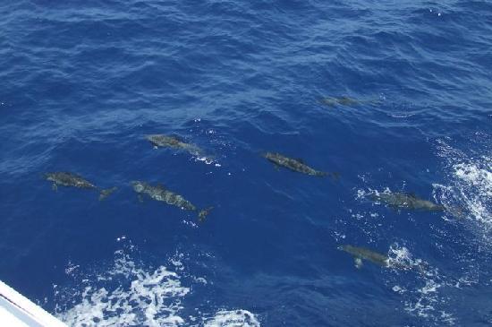 فندق جورجونيا بيتش: Les dauphins de Port Ghalib