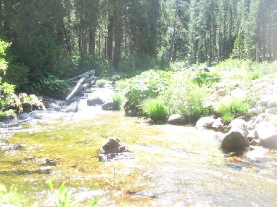 Placerville, CA: Creek by our campsite