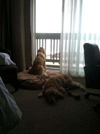 Best Western Plus Lighthouse Hotel: Our pups enjoyed the ocean view and walk on the beach